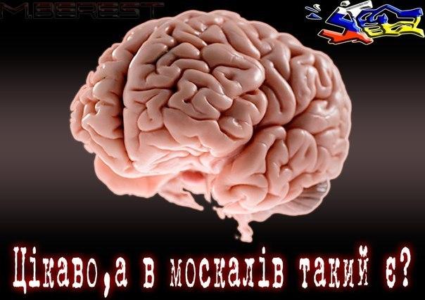 """130 боевиков, 2 """"Рапиры"""", 7 боевых бронемашин: в Станицу Луганскую прибыло пополнение для террористов, - ИС - Цензор.НЕТ 9371"""