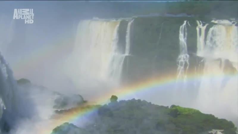 4 Пантанал Сердце дикой Бразилии 2012 1080i 720p