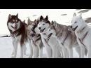 Видео к фильму «Белый плен» (2006): Трейлер