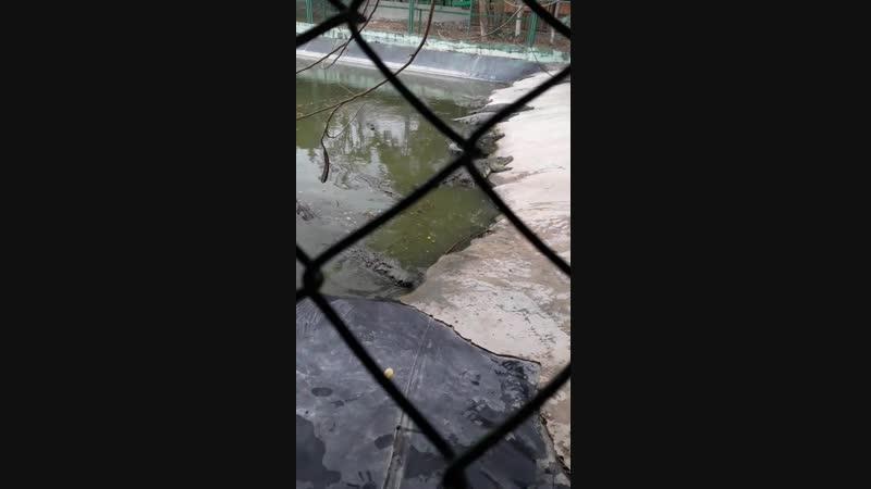 Крокодилы 2февраля 2019год!