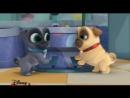 Дружные мопсы - Новая сери - Мастерская собак -