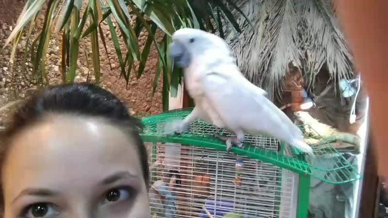 Миндо. Птичка любит ласку :)