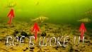 Реакция рыбы на КУЧУ мормышек Подводная съемка. Зимняя рыбалка 2018