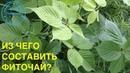 Выпуск 37 О Д Барнаулов Простые варианты фиточая