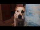 Собака_принесла_голодного_котенка_к_свое.mp4