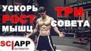 3 Способа Ускорить Рост Мышц Используй на Каждой Тренировке Джефф Кавальер