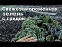 Конец тюльпанам. Заморозок в ст.Гостагаевская, 26 марта