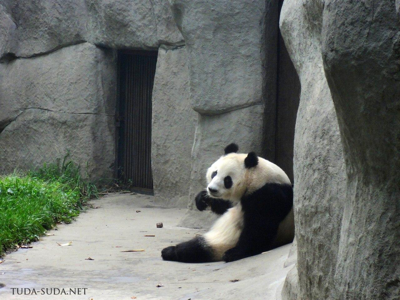 Центр изучения панд