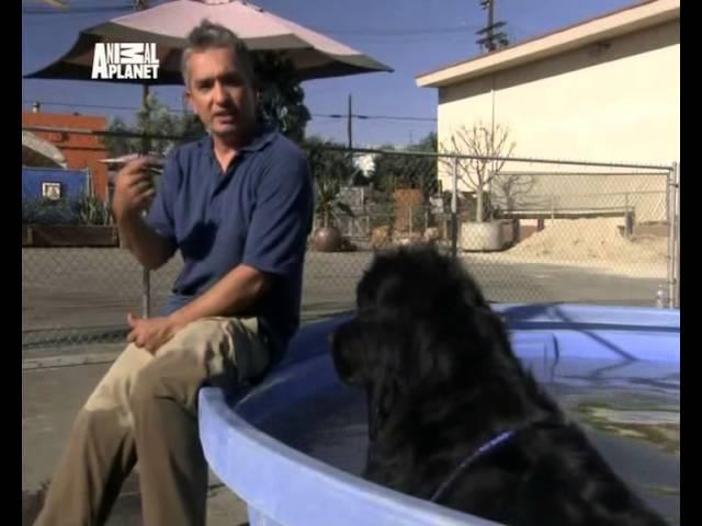 Переводчик с собачьего (сезон 02, серия 19)