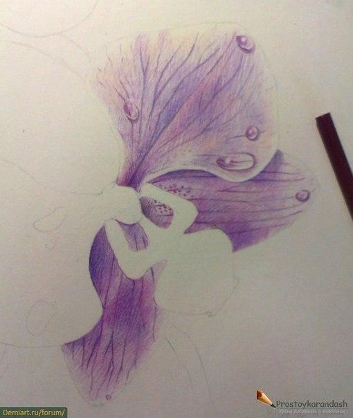 Орхидеи цветными карандашами (8 фото) - картинка