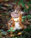Потрясающие снимки диких животных, на съемки которых был потрачен не один десяток часов