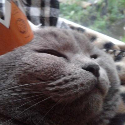 Кошка Сима, 15 марта , Санкт-Петербург, id223958389