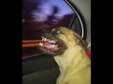 Собакен и окно в машине