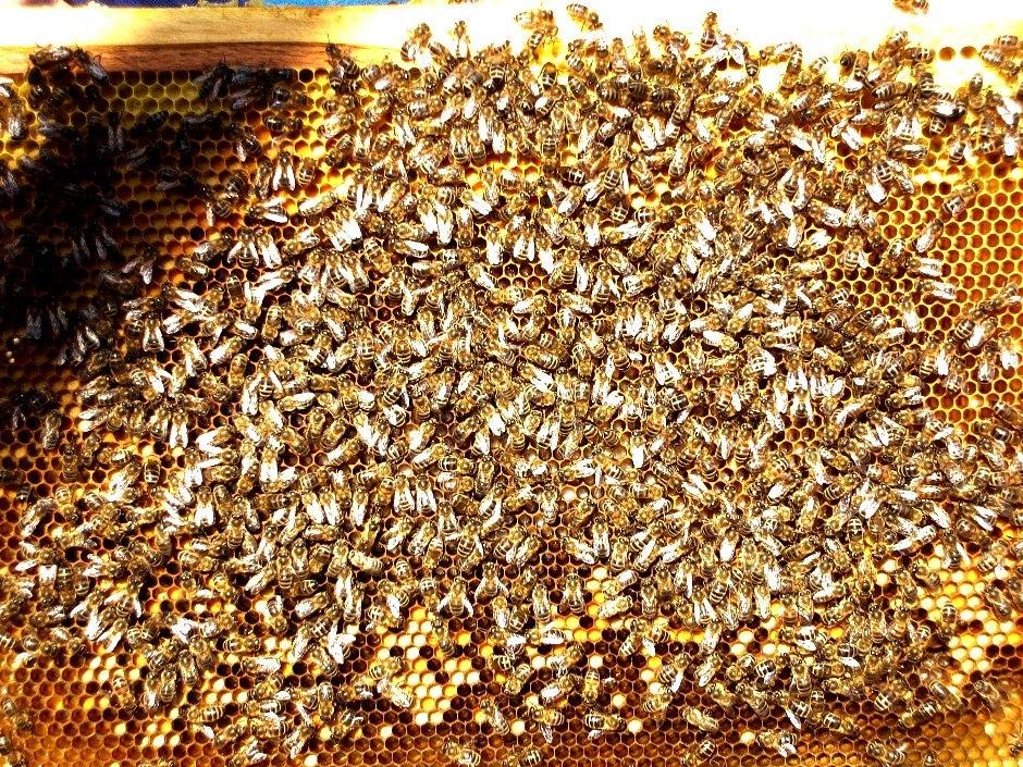 Пасека Александра Шунк. Пчелы