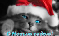 2015-й встречаем И накрываем щедрые столы, Друг друга с Новым годом поздравляем И дарим лучик солнца средь зимы. Пусть тает снег от ярких комплиментов! Пусть радость освещает небеса! Желаю вам восторженных моментов! Пусть в жизни вашей будут чудеса!