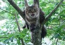 Соседка долго уговаривала своего кота слезть с дерева…Надоело…