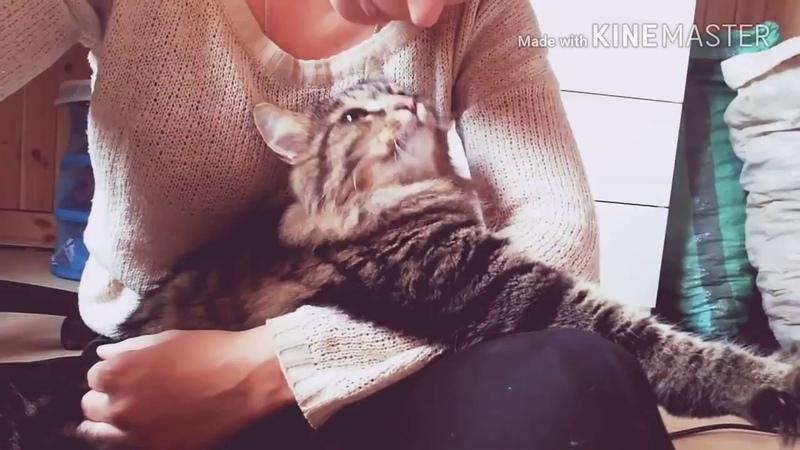 Это и есть любовь котов | Мимимишная подборка
