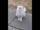 Ужасающий кот Уилфред стал звездой Сети