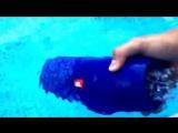 что будет с колонкой JBL CHARGE2 если я её брошу в бассейн , смотри мой тест с водой!