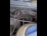 Предпусковой подогреватель на Voltvagen Passat B3