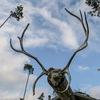 Ювонт-Кот (Лесной Дом ) Этнотуристическая компан