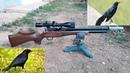 Control de plagas con rifle PCP Daystate Huntsman HR calibre 22
