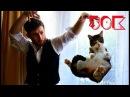 Коты Смешные коты до слёз Приколы с котами Видео смешные котики Приколы с животн...