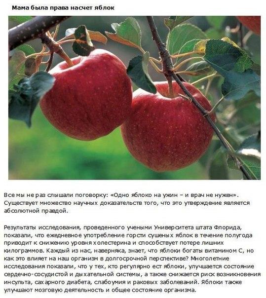 10 фактов о фруктах, которые должен знать каждый Без употребления в пищу различных фруктов, человек не получает необходимых для организма витаминов, которые являются неотъемлемой частью
