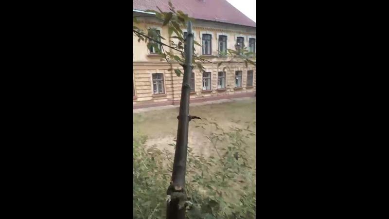 Даня Лиманский - Live