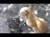кошки лижут друг друга)))Cats lick