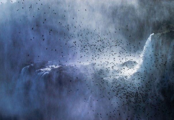 Стрижи летают над водопадом Игуасу