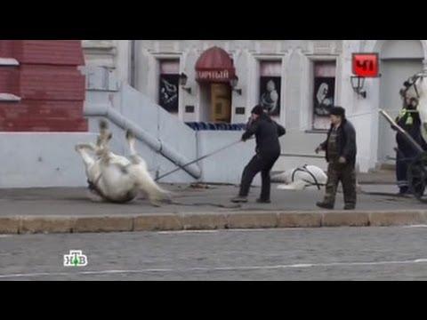 Обезумевшие лошади устроили переполох на Красной площади