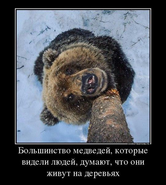 Новый год медведи картинки