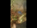 Как Митрич ходит за грибами