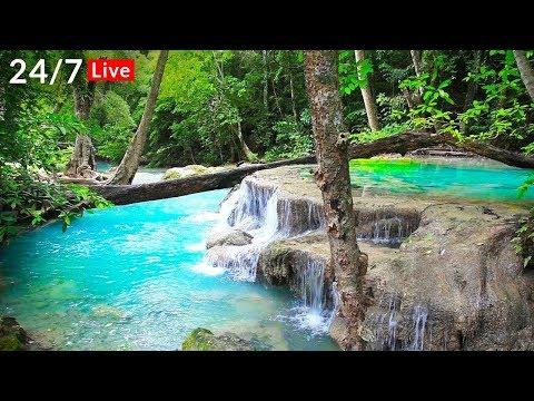 Waterfall Jungle Sounds 247 Beautiful Nature Sounds, Relaxing, Sleep, Meditation, Healing, Study