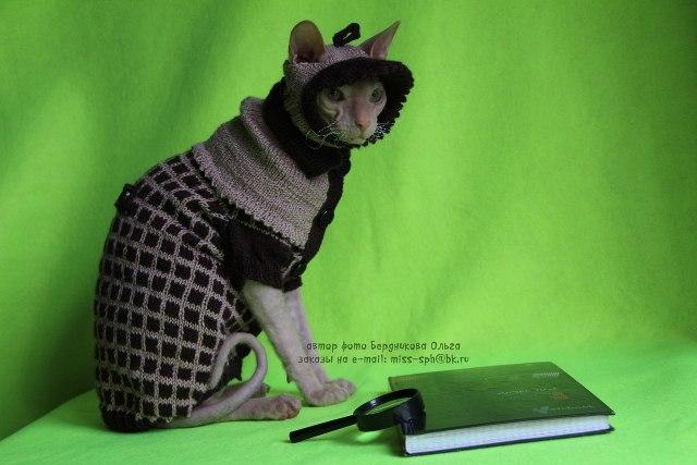 одежда для сфинксов кошек