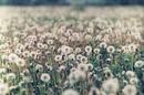 — Любимыe цвeты?