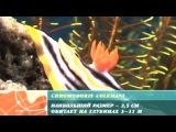 Предельная глубина - Рифы острова Апо