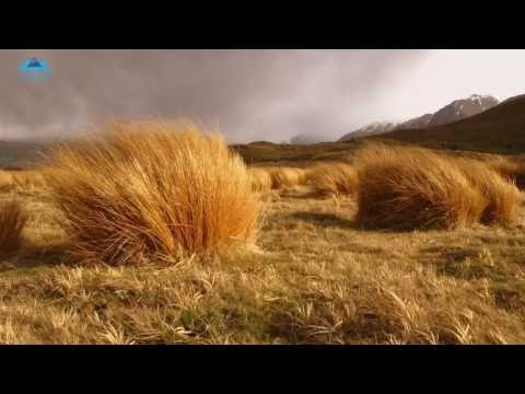 Howling Wind in a Cold Mountain, 8 HOURS ASMR for Relaxation, Sleep, Enjoy