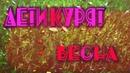 ВИА Дети Курят - Весна Live in @ SQUAT cafe, 20-10-2012