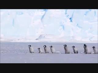 Пингвины. Воспитатель детского сада на прогулке с детьми