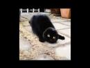 Shaking Cat