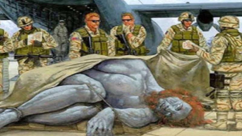 Гиганты существуют до сих пор. Свидетельства военных
