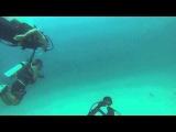 Farough Khodadadi 霍法如, diving with the sting rays ! Iran, Persian gulf, Kish Island! GOPR0300