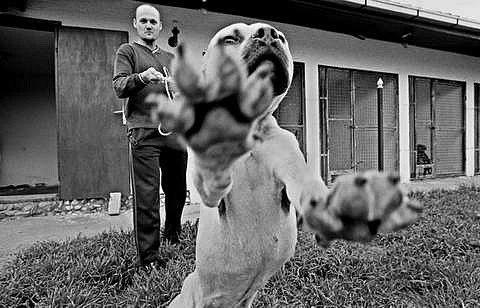 Литература о собаках, книги, рассказы, очерки.  - Страница 2 5SqkBMZkouQ