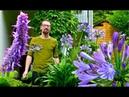 Juli im Raritäten-Garten - Gartenrundgang mit Panther-Lilie, Montbretie, Agastache und Ziertabak