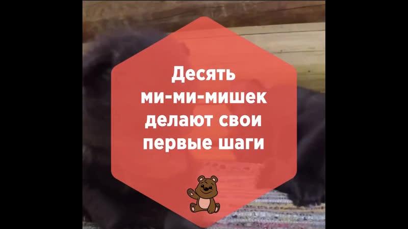 Десять медвежат