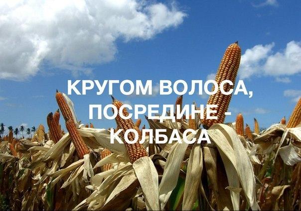Детские советские загадки, лучшие приколы интернета про животных