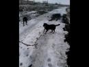 Волчок и Девчуля
