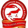 ✿ Помощь бездомным животным в Сочи ✿ ✔